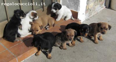 Ads Cani In Friuli Venezia Giulia Regalo Cuccioli