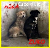 AIKA E ZUKO adozione d'amore un caso disperato si proteggono