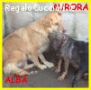 ALBA E AURORA