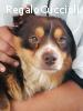 Asterix dolce cagnolino cerca casa