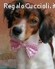 BEtty 2 anni dolce cagnolina cerca famiglia