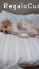 Biagio cucciolino di 3 mesi