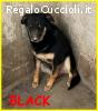 BLACK adozione d'amore cagnolone 5 anni mai uscito dal canil