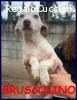 BRUSCOLINO cucciolino 4 mesi in canile aspetta una mamma uma