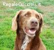 Carmen dolce cagnolina 1 anno ceca casa - occhi belli :)