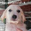 Chiara dolce cucciola 3 mesi cerca casa