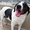 Ciccio dolce cagnolino bicolore cerca casa