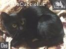 Cleo gattina di 7 mesi