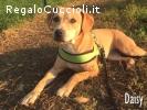 daisy cagnolina di 1 anno