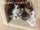 dolci gattini DIEGO DODO DOROTEA DANA