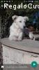 Domenica bellissima cucciolona cerca casa