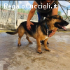 EROS dolce cagnolino in canile CERCA CASA