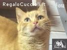 FIONA la giovane rossina mini gatta