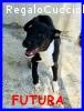 FUTURA cucciolotta 5 mesi catturata in strada