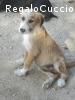 Klaus un cucciolo da amare e coccolare