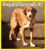 MELCHIORRE povero cagnolone adozione del cuore per salvarlo