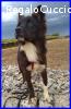 MORGANA cagnolina speciale 1 anno e mezzo scacciata dalla st
