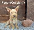 Nico, simpatico cucciolo, aspetta una famiglia