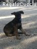 Paolino gioioso cucciolo cerca casa