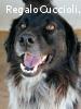 Plinio cagnolone 8 anni dolce ed atletico cerca casa