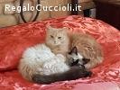 PRIMULA E FRAGOLA GATTINE 8 MESI