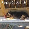 REGALO CUCCIOLO