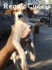 Rossella bella e tenera cucciolotta cerca casa