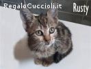 Rusty gattino di 3 mesi