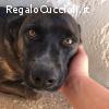SILK dolcissima cagnolina 4 anni cerca casa